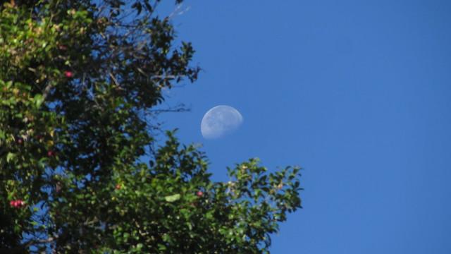IMG_7180 moon from goleta backyard