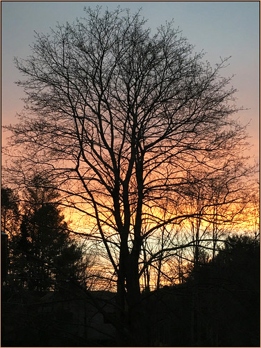 winter sky snow tree silhouette sunrise lenox westernmassachusetts berkshirecounty