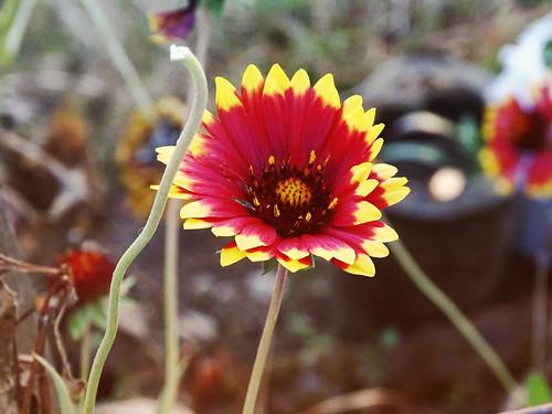 flowers india lansdowne