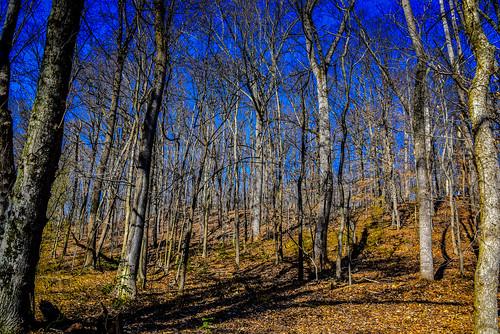 park trees winter usa mountains tree america landscape virginia us woods unitedstates run bull american va broad parc conservancy broadrun