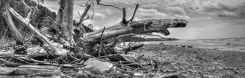 lakehuron landscape greatlakes beach driftwod d300 nikon photomatix camphermosa shore clouds sky shoreline debris ontario canada monochrome blackandwhite stones waves water coast knarrgallery darylknarr knarrphotography