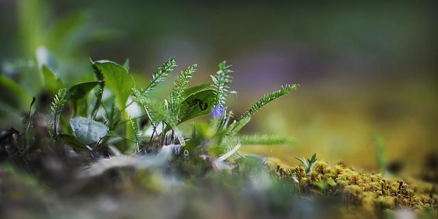 Little spring world...