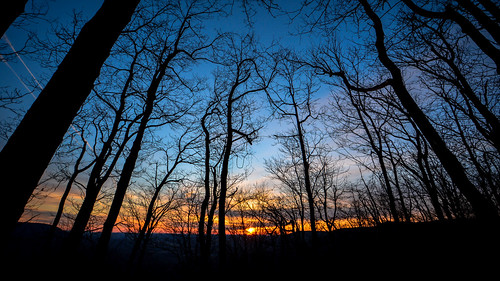 morning blue trees winter nature forest sunrise dawn woods pennsylvania bluehour nikon1024