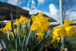 Blumenpracht | by Oberau-Online