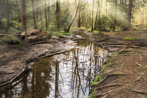 trees light sun reflection green forest sunrise woods stream peaceful sunrays