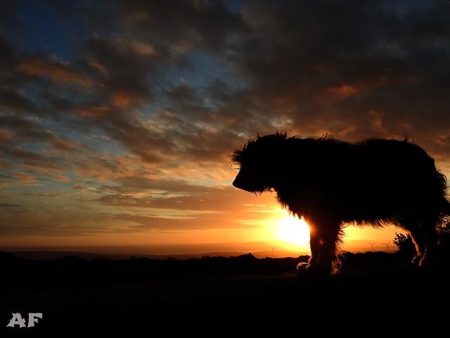 Sunset Dog 2