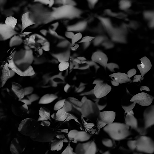 brownfamilyenvironmentalcenter d5000 dof nikon abstract blackwhite blackandwhite blur bokeh bw dreamlike dreamy forest landscape leaves light monochrome natural noahbw shadow square summer sunlight woods thicketdetails