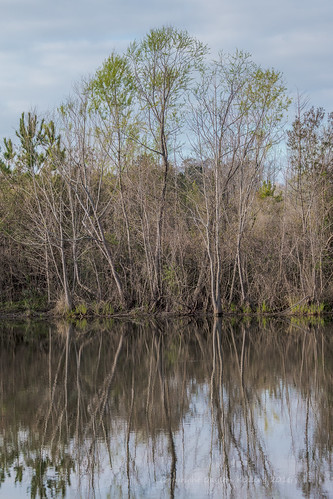 trees reflection nature water landscape pond louisiana conservation bluebonnet area blackwaterconservationarea bluebonnetconservationarea