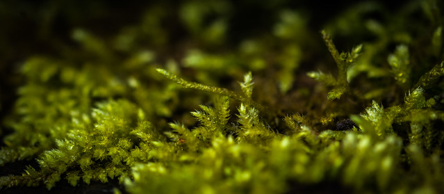 Down in the moss garden [Explored]
