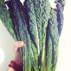 El kale es una de las verduras más versátiles de los últimos años. Puede comerse en guiso en ensalada, desecada como chips, enrollada... O como se te ocurra!!
