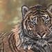 Sumatran Pride by Vany-Art