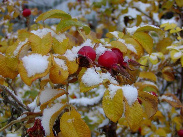 Oktober Schnee