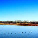 Marine Park Creek