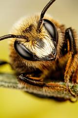 Mason Bee Series 1-3