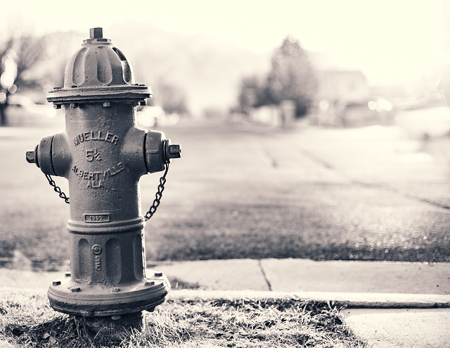 most days you're the dog but sometimes you're the hydrant - 56/366