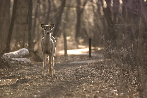 ca light sunset ontario canada nature animal landscape woods path walk wildlife conservation hike deer alberta windsor preserve improvementdistrictno9 ojbiway