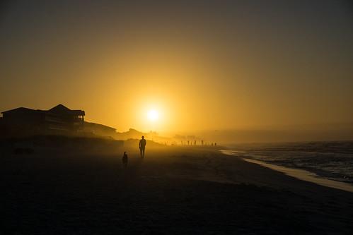 dog sun beach sunrise waves florida scenic silouette springbreak destin 2016