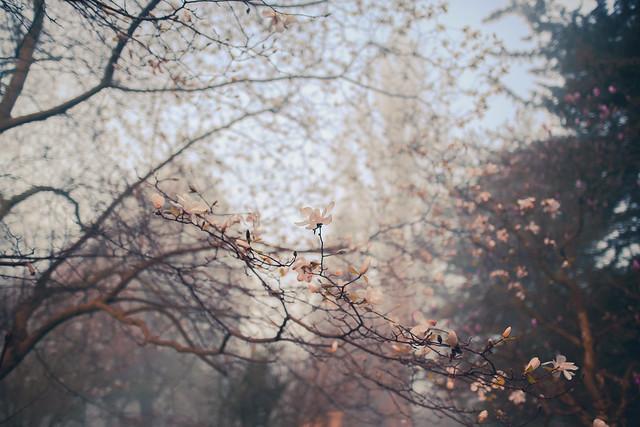 Magnolia Morning by Simon & His Camera