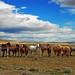 Patagonia Horses by Surreal McCoy (Alvin Brown)