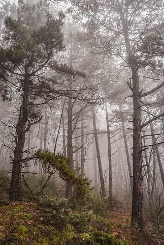 trees mist nature fog forest landscape woods foggy macedonia vodno thickcloud
