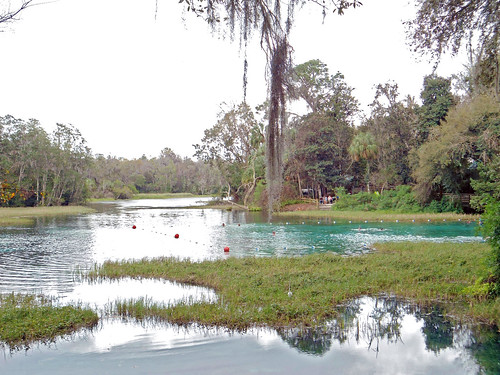 park water river spring scenery florida spanishmoss dunnellon rainbowspringsstatepark aquaticvegetation