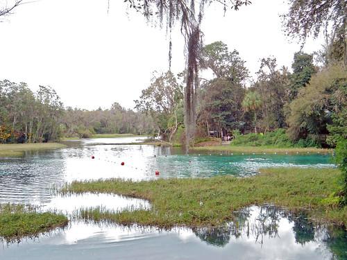park water river spring scenery florida spanishmoss dunnellon rainbowspringsstatepark aquaticvegetation