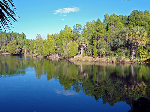 trees lake reflection water landscape woods scenery florida palmtrees crystalriver
