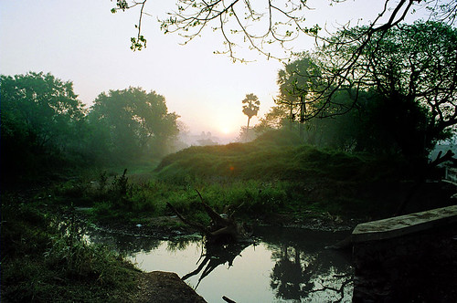 morning sun reflection green nature water sunrise dawn