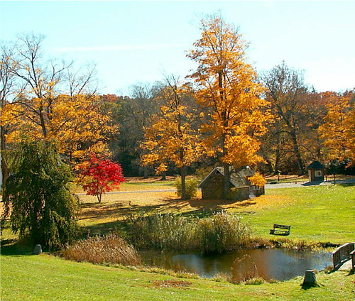 Fall Ringwood