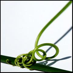 green plant spiral | by bradbowen