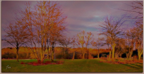 trees sun landscape ngc npc textured winterlight topaz lateafternoon pypehayespark jan130 picmonkey
