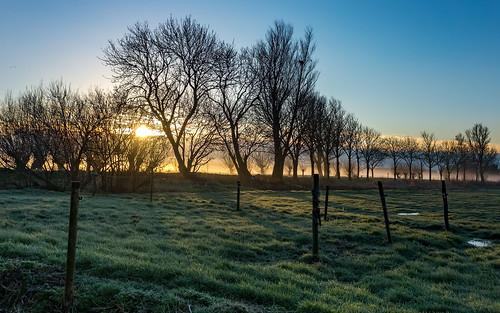trees field grass silhouette sunrise landscape bluesky sundawn fencepoles nederlandvandaag fencefriday