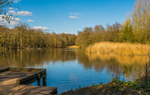 uk trees england lake green water pool clouds reflections reeds landscape spring fishing nikon outdoor jetty bluesky hank staffordshire westmidlands 2016 wetreflections baggeridgecountrypark d7100 bagpool southstafforshire tamron2470f28vcoutdoor