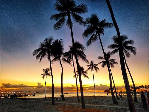 tree sky beach grass waikikibeach hawaii honolulu usa zajdowicz travel sunset landscape palms warm glow cellphone motorola droid turbo availablelight snapsees outdoor outside water ocean clouds silhouette tropics vacation