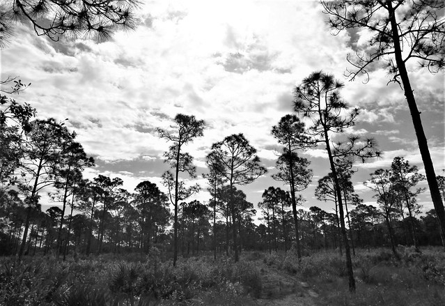 Trees and clouds 7061