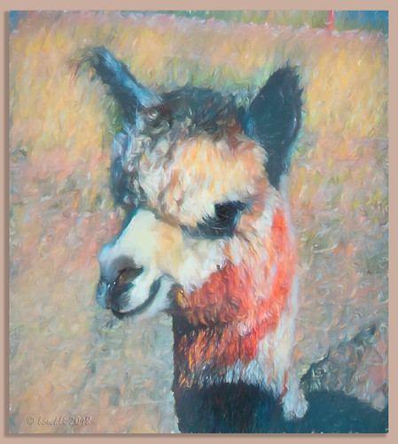 alpaca tier animals outdoor topaz topazstudio airemix textures texturen texture textur photoborder rahmen bunt farbig farbenfroh colourful face pastel painting animal