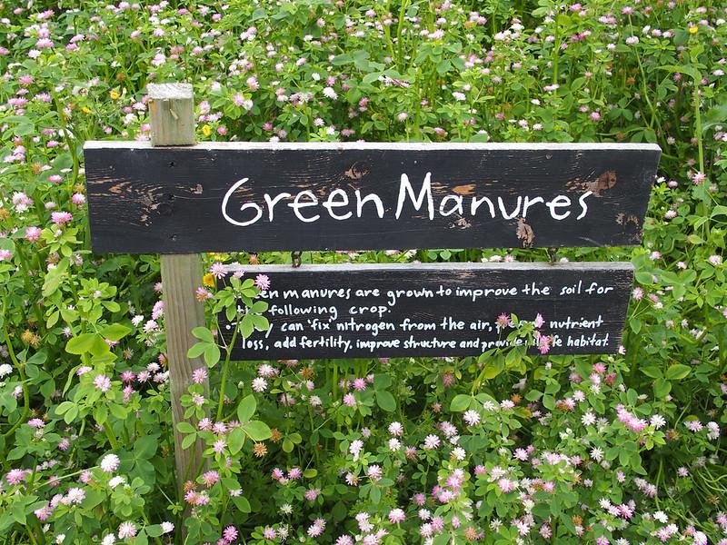 Green manures