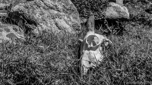 IMG_5636St Kilda 2018 | by Noodlefish