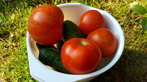 Tomatoes, first of 2018 | by chalkahlom
