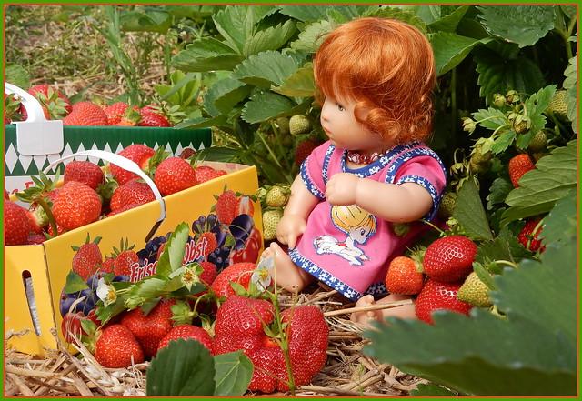 Planscherle ... meine süße Ernte ...