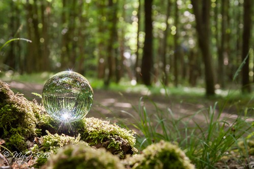 artwork arbre zen emotion randonnée reflexion tree mygphotographiewixsitecommyg2017 myg imagination infinity outdoor overijse paysage panorama peace macro mood landscape light forest quiet glass orb glassball 2018 nikonafsdxnikkor18105mm3556g dof depthoffield