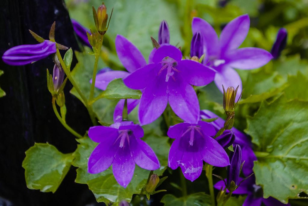 So lovely floral capture !  12:08:16 DSC_8526-2