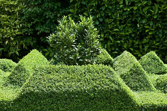 Norfolk green