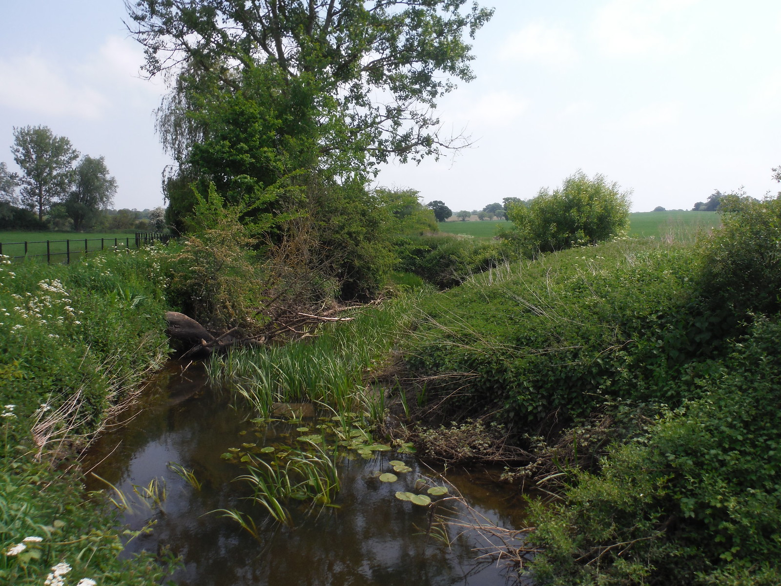 The Wid River SWC Walk 158 - Ingatestone to Battlesbridge or Wickford