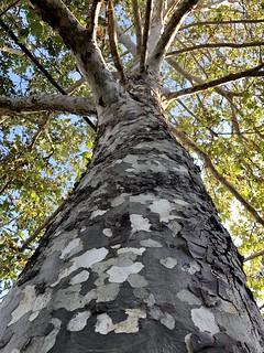 155/365: Camo tree | by joehribar