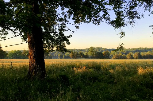 sunrise whitehouse station trees field nj readington
