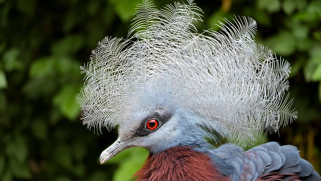 Bird Pairi Daiza