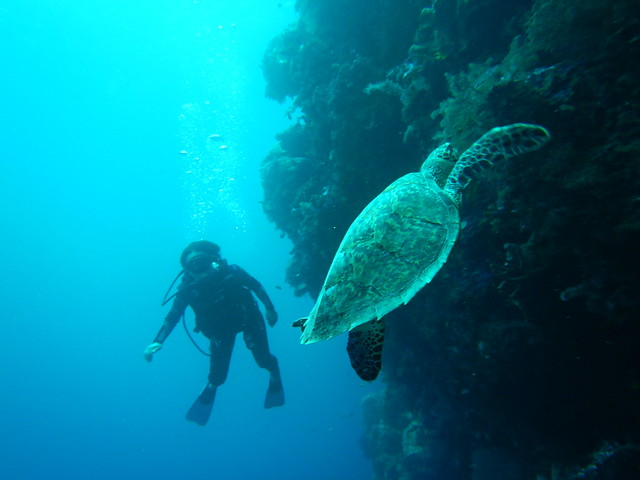 Doesn't everyone see a turtle on their first dive? by bryandkeith on flickr
