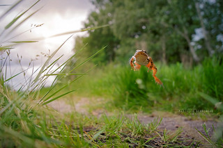 Agile frog, the jump | by Matthieu Berroneau