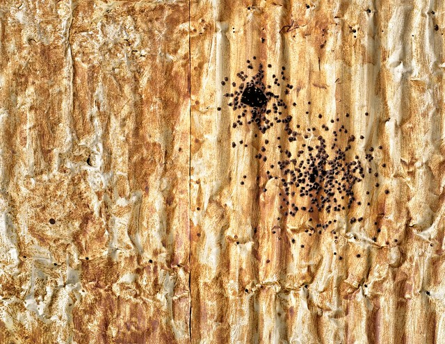 Rusted Corrugated Wall 5558 A
